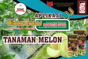 Panduan Aplikasi Biotogrow Untuk Tanaman Melon