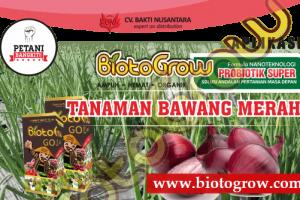 Panduan Aplikasi Biotogrow Tanaman Bawang Merah