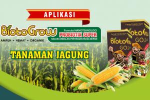 Petunjuk Aplikasi Biotogrow Tanaman Jagung
